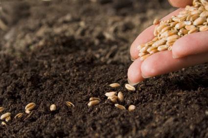 sod_seeding
