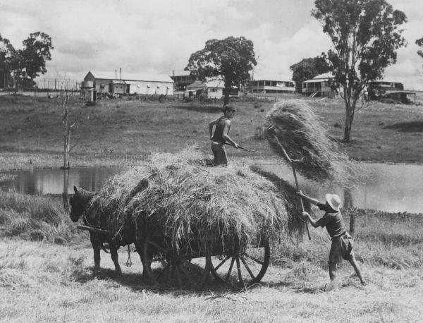 work-farm